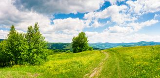 Country road through grassy meadow on hillside. Beautiful summer scenery of Carpathian mountains. gorgeous cloudscape on a blue sky Royalty Free Stock Photos