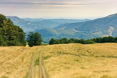 Country road through grassy meadow in mountains. Nature scenery with beech trees in the distance. sunny late summer landscape with clouds on a blue sky stock photo