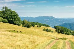 Country road through grassy meadow in mountains. Nature scenery with beech trees in the distance. sunny late summer landscape with clouds on a blue sky royalty free stock image