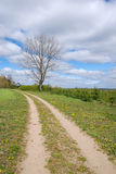 Country road in green field stock photography