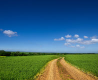 Country road through a green field Stock Photography
