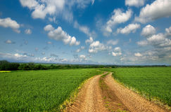 Country road through a green field Royalty Free Stock Photo