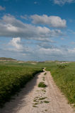 Country road, green field and sky Royalty Free Stock Image