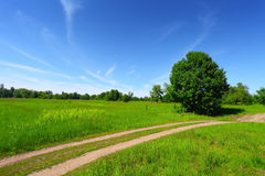 Country road in green field and trees. On blue sky background Royalty Free Stock Images
