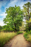 Country road in green forest Royalty Free Stock Photo