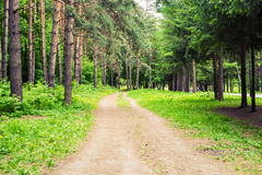 Country road through green lush tree alley in beautiful park on sunny summer day Stock Image