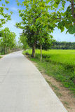 Country road in green rice field. Stock Images