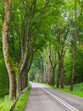 Country road with green tree alley Stock Photography