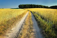 Country road,green trees and sun. Royalty Free Stock Photography