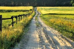 Country road,green trees and sun. Royalty Free Stock Image