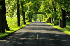 Country road,green trees and sun. Royalty Free Stock Photos