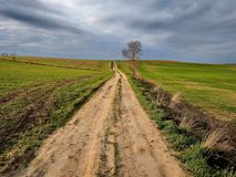 Country road,green trees and sun. Stock Images