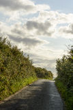 Country road between hedges near Looe, Cornwall Royalty Free Stock Image