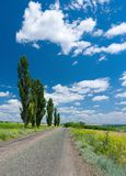 Country road, high poplars and cloudy sky Stock Photos