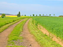 Country Road In Green Field Royalty Free Stock Images