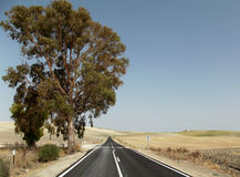 Country Road, Jerez, Andalusia, Spain Stock Images