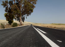 Country Road, Jerez, Andalusia, Spain Stock Photography