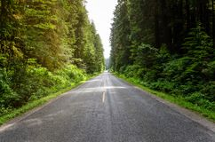 Country Road Lined with Tall Trees at Sunset royalty free stock photography