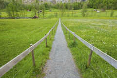 Country road and meadow Stock Image