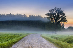Country road in the mist, Latvia Stock Image
