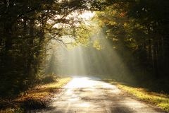 Country road through a misty autumn forest at sunrise royalty free stock photography