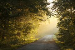 Country road through a misty autumnal forest