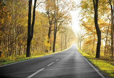Country road in morning Royalty Free Stock Photo