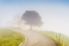 Country road with morning fog Royalty Free Stock Image