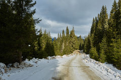 Country road through mountain forest Royalty Free Stock Image