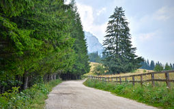 Country road. Mountain gravel road in Carpathians mountains in Romania Royalty Free Stock Photo