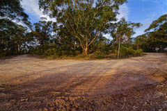 Country road with mud tracks in eucalyptus mountain forest, Blue Royalty Free Stock Images