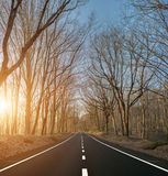 Country road with naked trees Stock Images