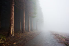 Country road near foggy forest Royalty Free Stock Photos