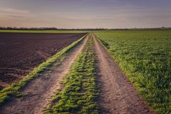 Fields in Austria. Country road near Rabensburg village in Austria royalty free stock photos