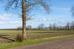 Country road in the Netherlands with farmland Stock Photos
