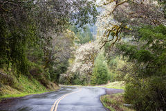 Country Road Through Northern California Forest. A country road winds through a forested California landscape Stock Photo