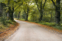 Country road among old autumnal oaks Royalty Free Stock Photography
