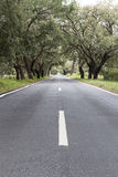 Country road with old cork oaks. Portugal country road and old cork oaks around Stock Photo