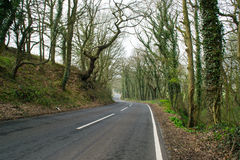The country road. Royalty Free Stock Photo