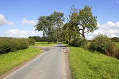Country road and old trees Stock Photography