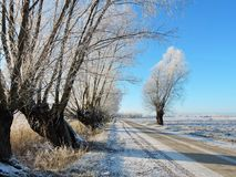 Country road and old trees in winter , Lithuania Royalty Free Stock Photography