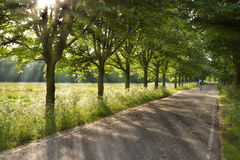 Country Road On Early Morning In Spring Royalty Free Stock Image