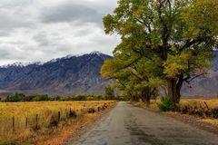 Country road with open field of sage brush and lined with oak trees in fall with snow capped mountain background royalty free stock image
