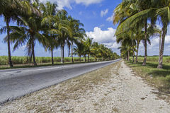 Country road with palm trees on Cuba Stock Images