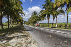 Country road with palm trees on Cuba Royalty Free Stock Image