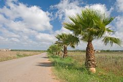 Country road with palms Stock Photo