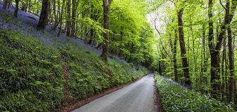 Country Road Panoramic. Country road panoramic in Spring with wildflowers stock photo