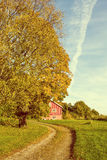 Country road passing autumn colored tree vintage effects Stock Image