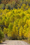 Country Road Past Yellow Aspens Royalty Free Stock Photos