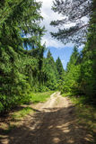 Country road through pine forest Stock Images